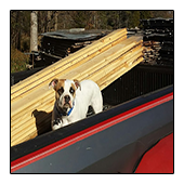 Bluesy Continues loading TreeHugger Lumber